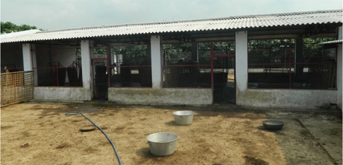 Goat Farm Designs considerations and Space Requirements of goats in Indian Conditions